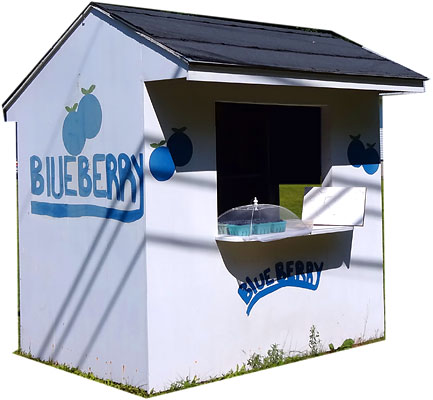 Maine Blueberry Stands