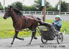 Maine Harness Racing