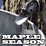 Maple Sugar Season in Maine