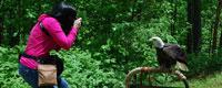 Maine Wildlife Park, Gray ME attraction