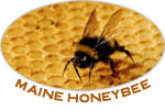 Maine Honey Bee