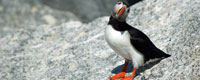 Project Puffin Visitor Center, Rockland ME attraction