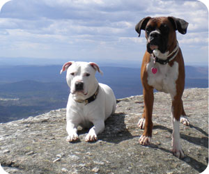 Pet Friendly Maine lodging
